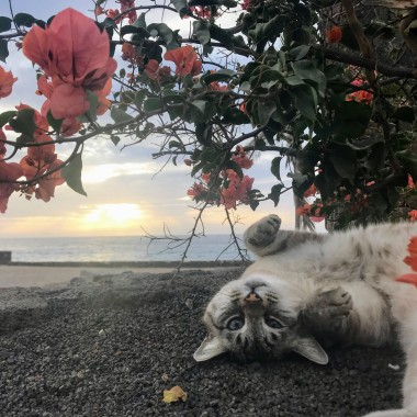 Watching the sunrise with one of the local cats