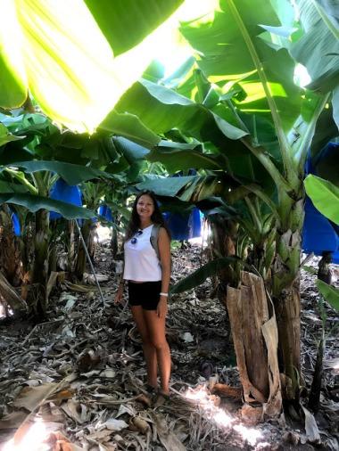 Walking among the banana treess