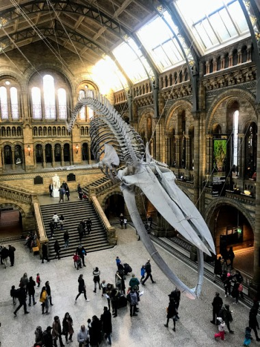 Whale skeleton inside Natural History Museum
